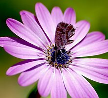 In the Pink by Declan Carr
