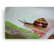 Slow Snail Canvas Print