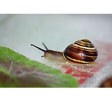 Slow Snail Photographic Print