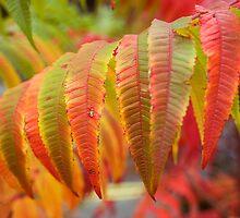 Autumn by Geoff Carpenter