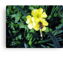 Sour Bee Canvas Print