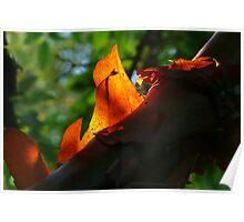 Flaming Tree Bark Poster