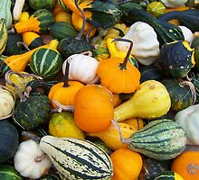 Harvest of the Gourds by A Different Eye Photography