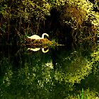 'Swan Lake' - Pocklington Canal by charlylou