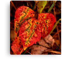 Three Leaves...One Heart Canvas Print