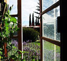 The open window by STEPHANIE STENGEL | STELONATURE PHOTOGRAHY