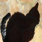 Shadow Cat by cebrfa