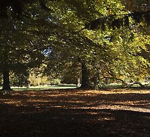 Autumn in the park by Steve plowman