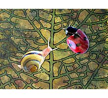 Leaf with Ladybug & Snail Photographic Print