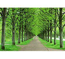 Spring Renewal Photographic Print