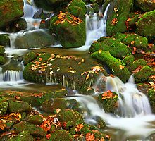 GREAT SMOKY MOUNTAINS NATIONAL PARK by Chuck Wickham