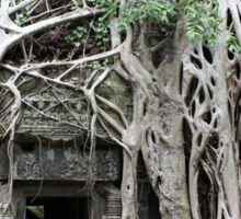Wild Roots - Ta Prohm, Angkor, Cambodia Sticker