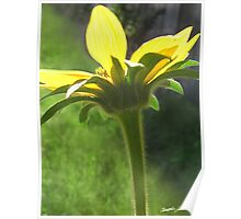 Large Yellow Wildflowers 3 Poster