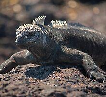 Iguana's portrait by becks78