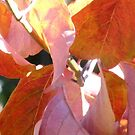 Autumn leaves by Santie Amery