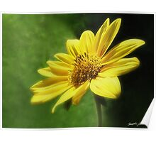 Large Yellow Wildflowers 4 Poster
