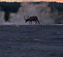 Bull Elk at Twilight by Jennifer Nestler