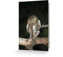 Elf Owl with prey Greeting Card