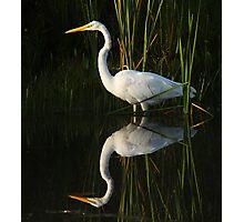 Great egret and reflection Photographic Print