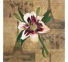 Lily of France Photographic Print