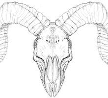 Ram Pencil Skull by Arnau Ros