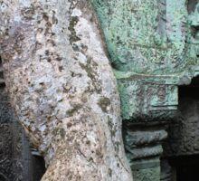 Serpent Branch - Ta Prohm, Angkor Wat, Cambodia Sticker