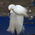 Snowy Egret Posing by Wing Tong