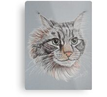 """Romeo Maine Coon Cat"" Metal Print"