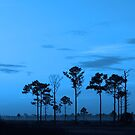 Florida blues by kathy s gillentine