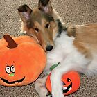 Lovin' those Pumpkins! by Jan  Wall