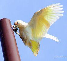 Cockatoo by Julia Harwood