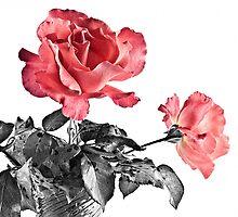 Dos Rosas by ElidArt
