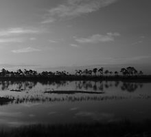 daybreak in the swamps by kathy s gillentine