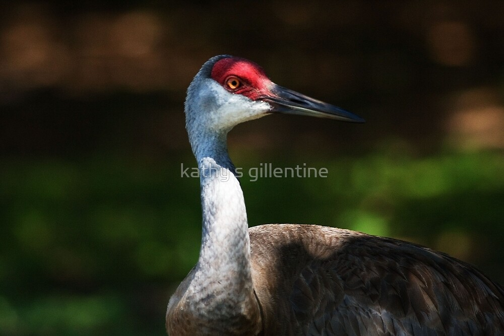 are you looking at me ? by kathy s gillentine