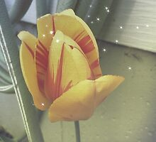 Yellow tulip with stripes by RobinEArt