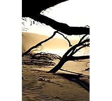TWISTY LIMBS Photographic Print
