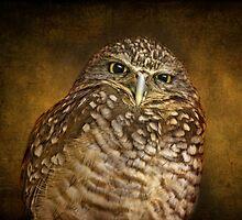 Burrowing Owl by Pat Abbott