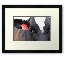 Cow 138 Framed Print