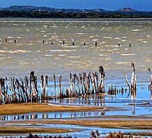 Meningie Panorama by Victor Pugatschew