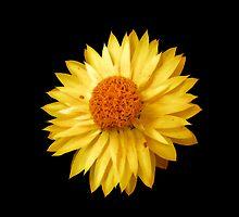 Sunshine by Dmarie Frankulin