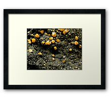 The Hidden Land – A Field of Golden Boulders Framed Print