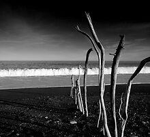Birdling's Flat, Drift Wood Sculpture by Greg  Sorenson