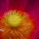 Lotus by ARTISTOFLIGHT