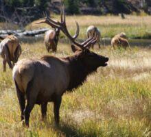 Bull Elk - Yellowstone Sticker