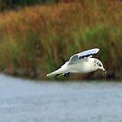 Here fishy, Fishy......... F I S H Y !!@#%!!! by Larry Llewellyn