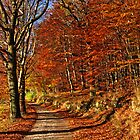 Autumn road by Trine