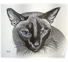 Blue Eyes - Ginger Poster