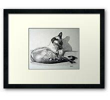 Relaxing - Ginger Framed Print