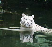 White Tiger. by elphonline