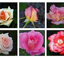 Rose collage by ♥⊱ B. Randi Bailey